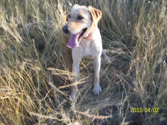 Hunting Dog Training Ogden Utah